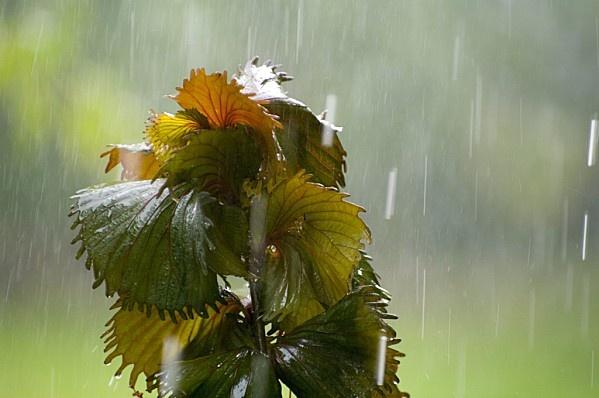 jardin sous la pluie (13)