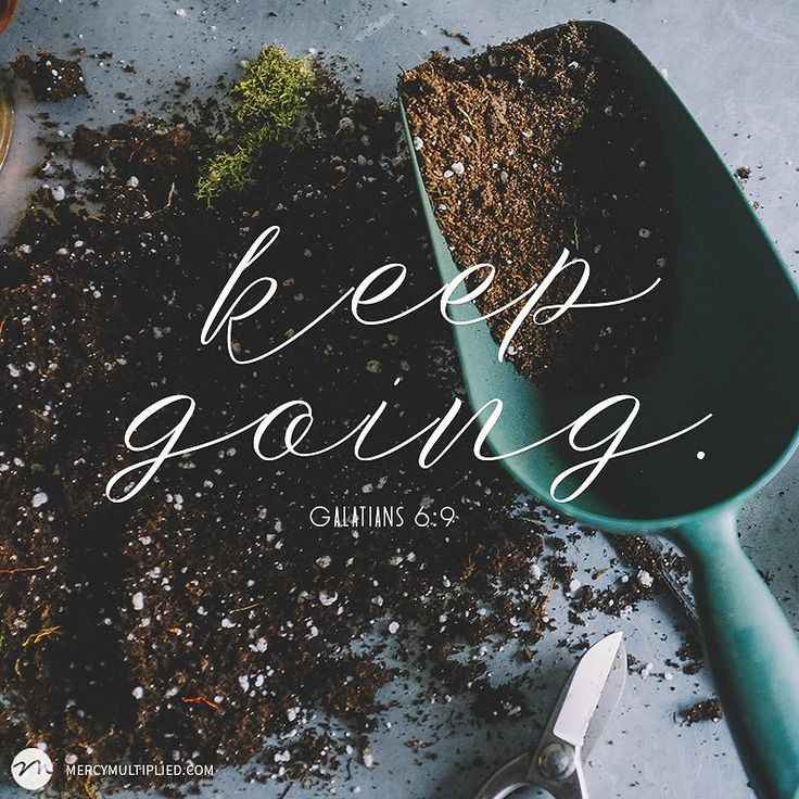 "#WednesdayWisdom ""And let us not grow weary of doing good for in due season we will reap if we do not give up."" Galatians 6:9"