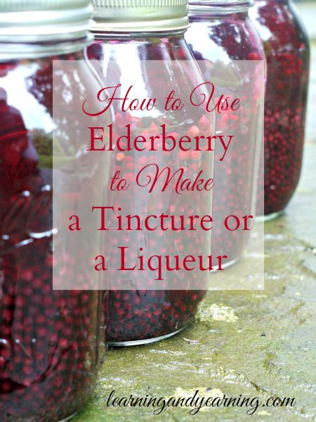 Actually, tinctures and liqueurs start out in the exact same manner. Vodka is poured over the elderberries which are then left to sit in a cool, dark place for several weeks.