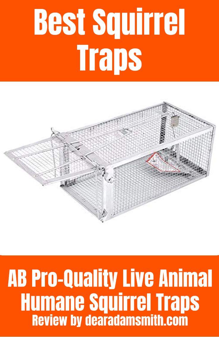 Best squirrel trap that works 2019 live animals