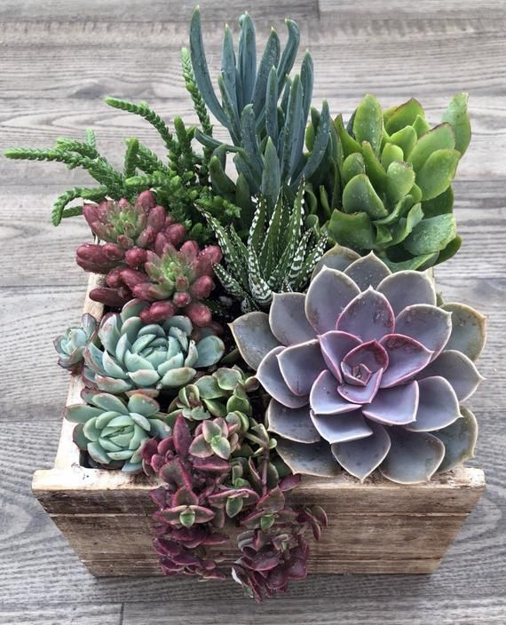Succulent Arrangement | Live succulents planted in a farmhouse style wood planter box | Christmas Gifts | Birthday Gift | Centerpiece Succulent Arrangement Mother's Day Gift Small Rustic | Etsy