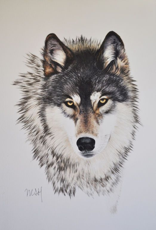 lobo 1                                                                                                                                                                                 Más