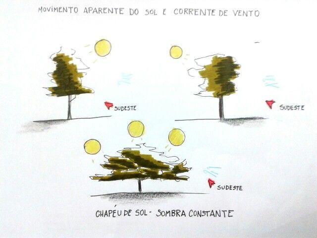 Por : Fernanda Bonon .  Sombras produzidas nas arvores brasileiras decorrebte do movimento aparente do sol e corrente de vento