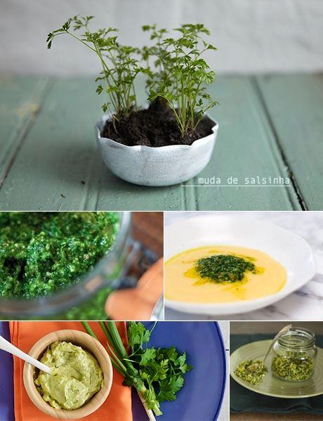 Ervas frescas: Salsinha - De sabor levemente picante, com toque de anis, a salsinha faz parte do grupo de ervas que não gostam de calor. Isso é, ela basicamente entra no prato, e não na panela! Mas a salsinha não é só enfeite. Ela também traz inúmeros benefícios para a sua saúde. Pra começar, é uma ótima fonte de antioxidantes, rica em vitamina A, C e ácido fólico, que além de ajudar a combater anemias, fortalece unhas e cabelo.