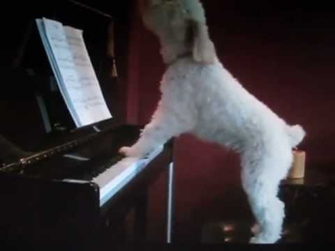 Dog composer FUNNY :))