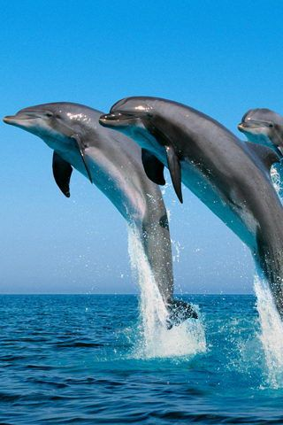 25+ best ideas about Dolphin facts for kids on Pinterest | Whale ...