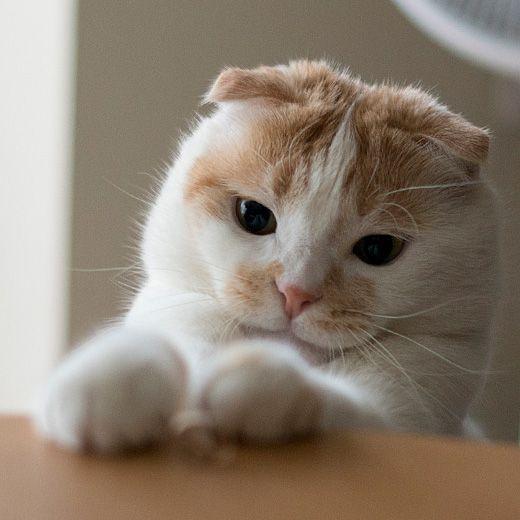 #cat #cute #japan #tokyo #cooljapan #japankuru #nice #good #cool #wow #heart #eyes #baby #animal #pet #kawaii #love #lovely #かわいい #猫 #ネコ #ねこ #日本 #東京 #旅行 #愛 #고양이 #큐트 #아기 #사랑 #펫 #일본 #도쿄 #귀여워 #여행 #동물 #완소