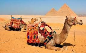 #MoroccoPrivateTours take you on a journey through history, culture and incredible, ever diverse landscapes. Know more @ http://camelsafaritreks.blogspot.in/2016/03/information-you-should-know-about.html