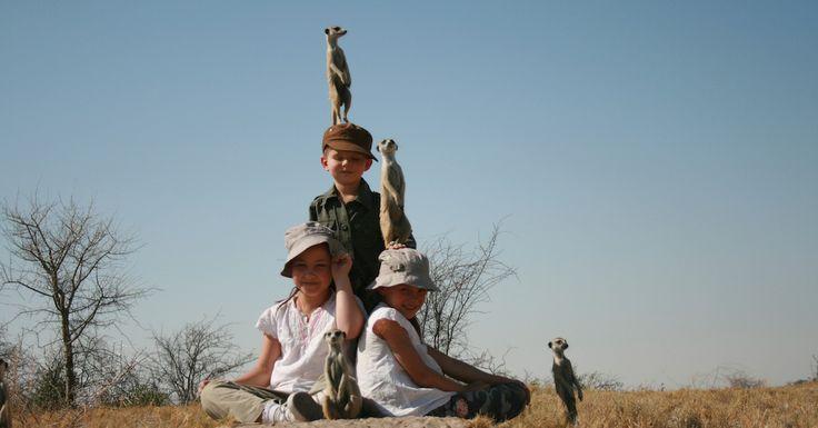 Meerkat experiences