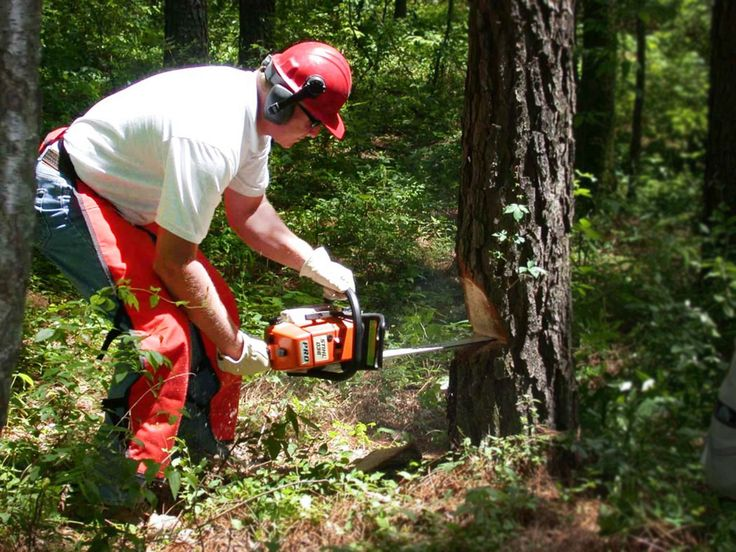 Need to remove or cut down some trees? Don't stress yourself more. We have Professional Tree Removal Service!