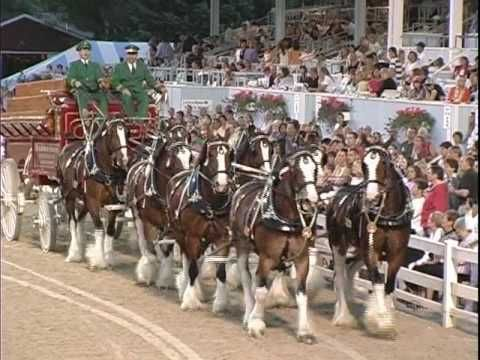 131 best budweiser horses images on pinterest clydesdale horses budwieser clydesdales at 2008 devon horse show youtube aloadofball Choice Image