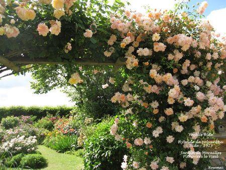 1041 best images about roses on pinterest. Black Bedroom Furniture Sets. Home Design Ideas