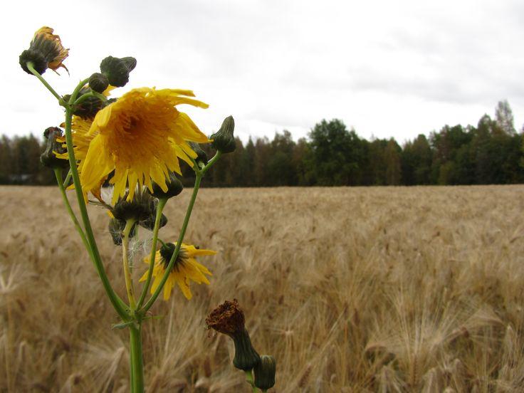 JKL, Haukanniemi, syyskuu 2012
