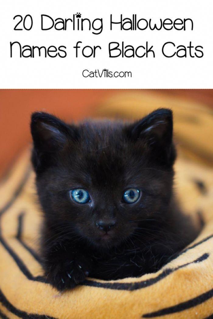 20 Darling Halloween Names For Black Cats Catvills Names For Black Cats Halloween Names For Cats Cute Cat Names