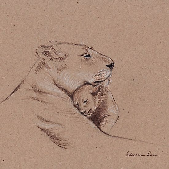 """""""A Mother's Pride"""" Lioness and cub original pencil drawing."""