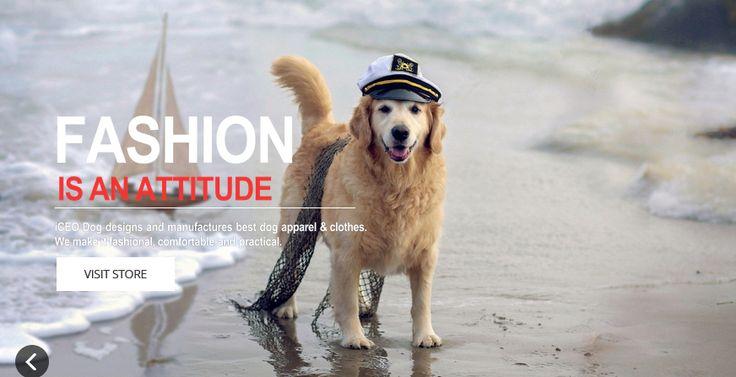 Provato per voi e noi...: What Is iCEO Dog?