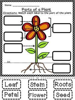 PLANT PARTS AND FUNCTIONS CUT AND PASTE ACTIVITIES! - TeachersPayTeachers.com