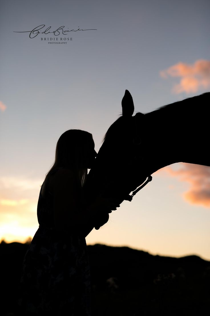 Equine Photographer   Horses   Bridie Rose Photography