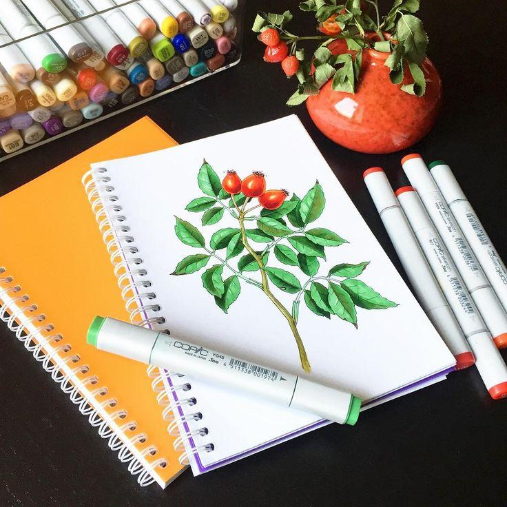 В этот четверг с 19:00 до 21:30 рисуем осенние овощи и фрукты в @lustraschool. Рисовать будем маркерами Promarker фирмы Letraset в желто-оранжевых (осень же ) блокнотах Canson. Присоединяйтесь! Подробности - в профиле @lustraschool  #скетч #sketch #sketching #flowers #botanicalillustration #copic #copicart #copicmarkers #sketch_daily #МК_v0lha #v0lha_sketch