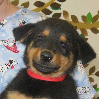 lol look at that face! Dog Adoption San Diego - Adopt A Dog   Cat Adoption San Diego - Adopt A Cat   Helen Woodward Animal Center