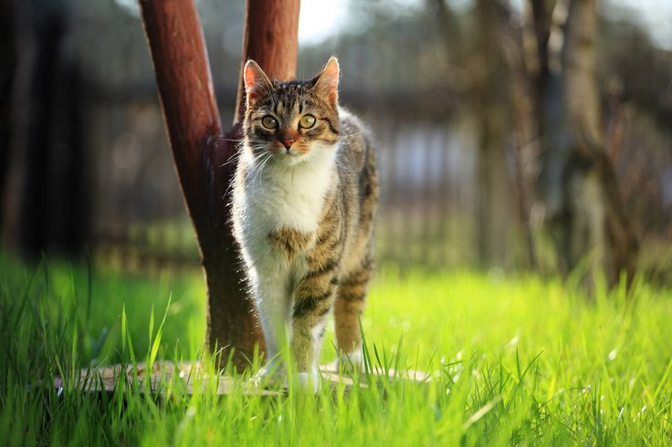 Learn about natural and organic cat food labels. With our primer on natural nutrition, you can give your feline friend the food she needs.