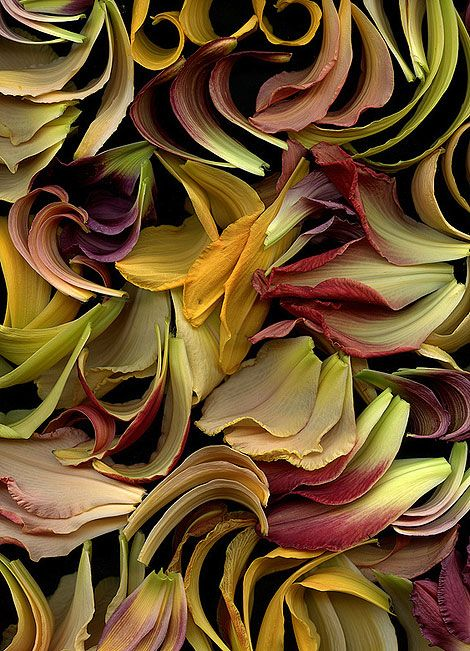 Be inspired by nature…Horticultural Art..  Simply beautiful moments in nature … be inspired by these colours and fill your life with them.
