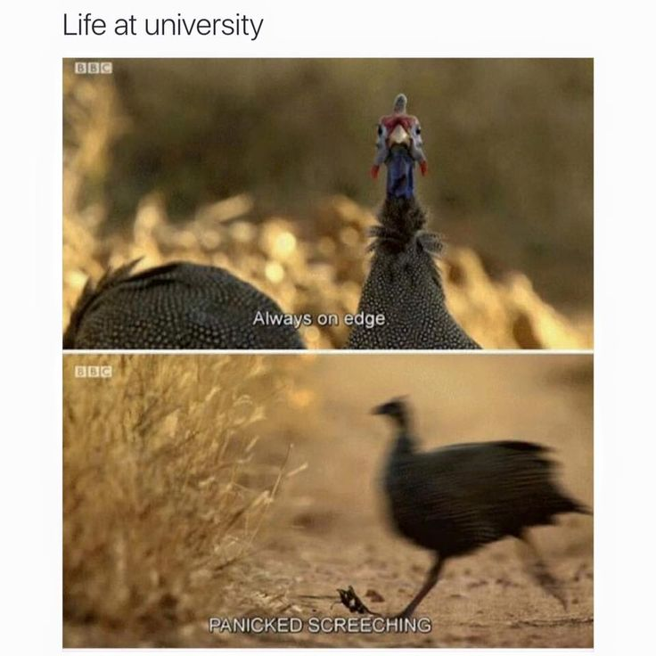 Accurate life at college