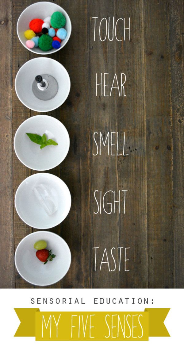 Sensorial Education: My Five Senses (+ printable) - Playful Learning