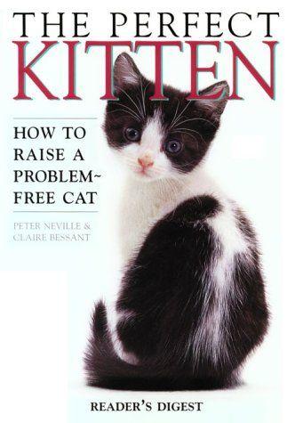 Vanessa - The Perfect Kitten by Peter Neville.