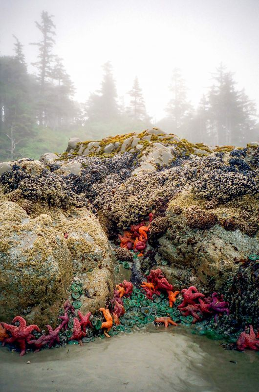 Low tide on Chesterman Beach, Tofino, Vancouver Island. Image by Gilles Frechette. #beautifulworld http://www.lonelyplanet.com/photocomp?lpaffil=soc_pi_p_o_bw