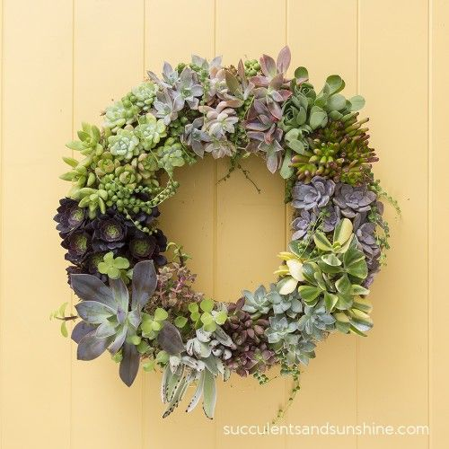 Living Succulent Wreath - Succulents and Sunshine