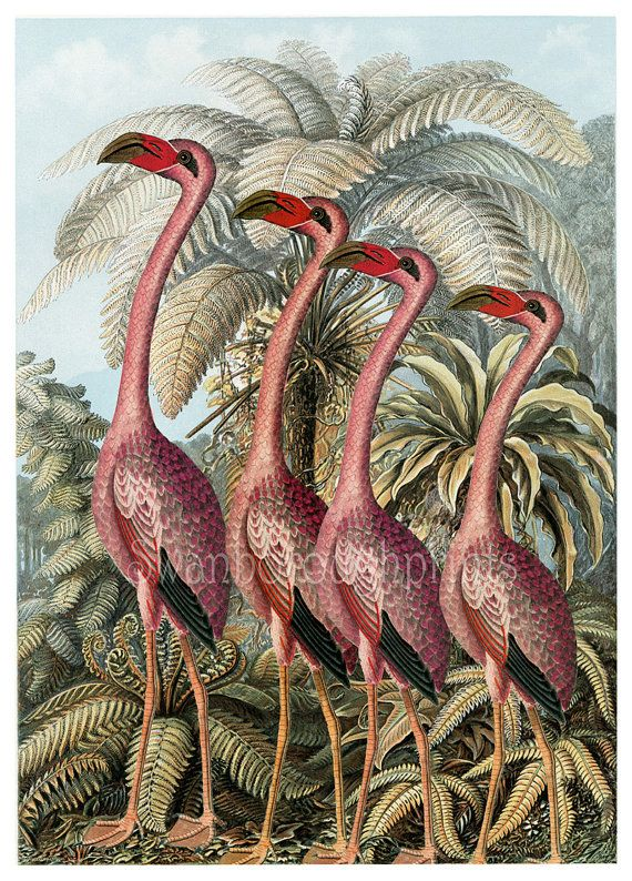 Pink Flamingo Print Home Decor Picture Gift By