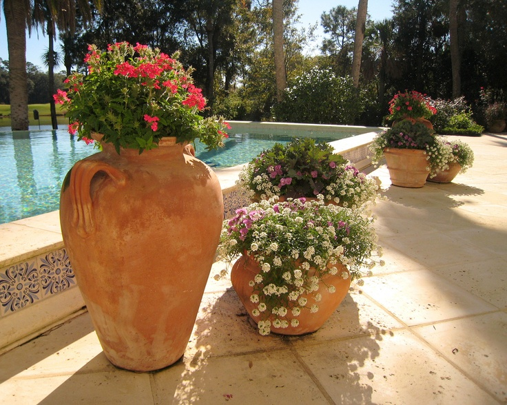 17 Best images about Pool ideas for planters etc on