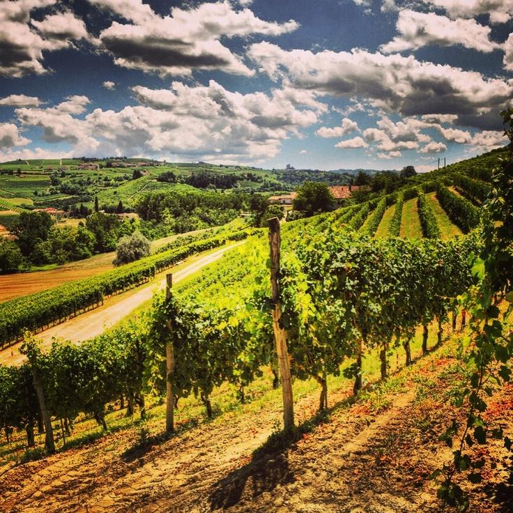 Amazing view of Piedmont, italian region home of Nebbiolo wines ( Barolo and Barbaresco)