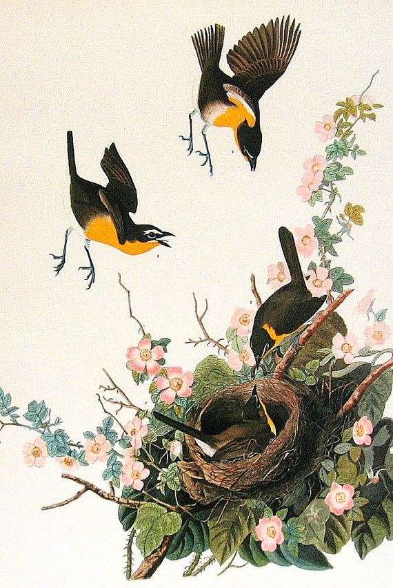 1000 Images About John James Audubon On Pinterest John