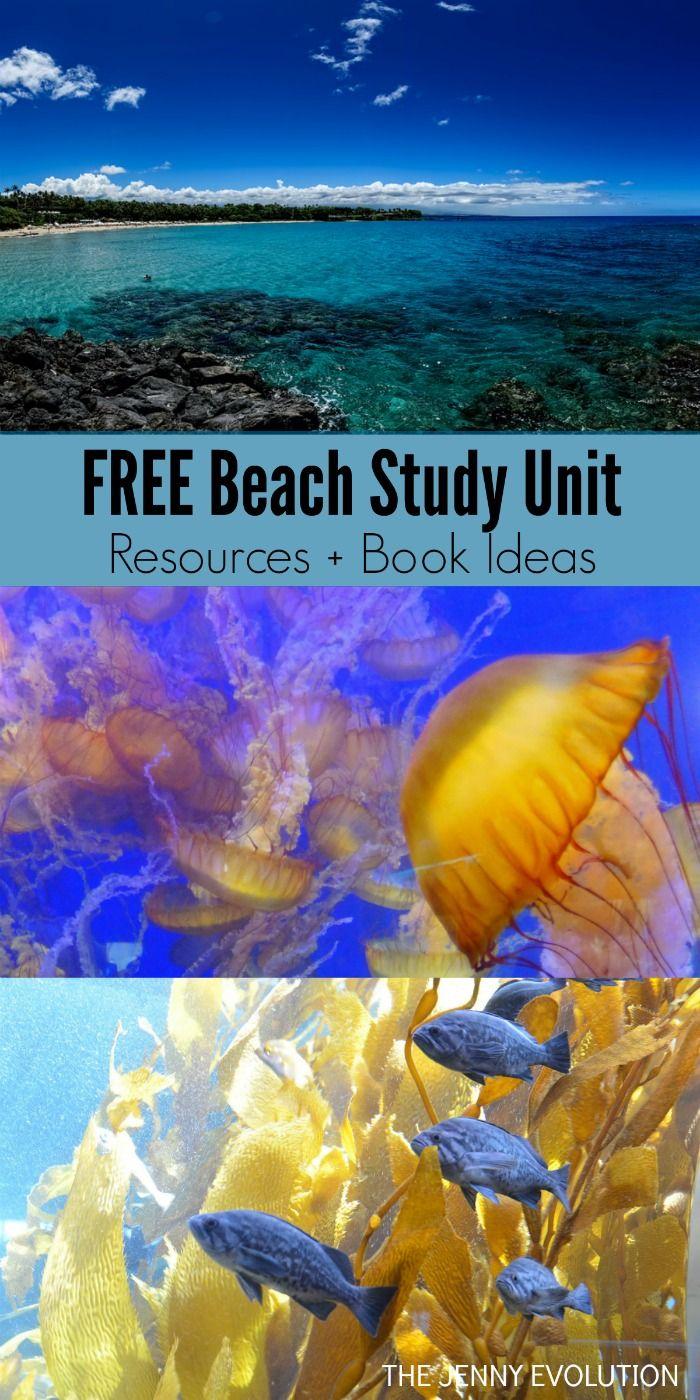 Beach Unit Study Resources + Children's Book Ideas