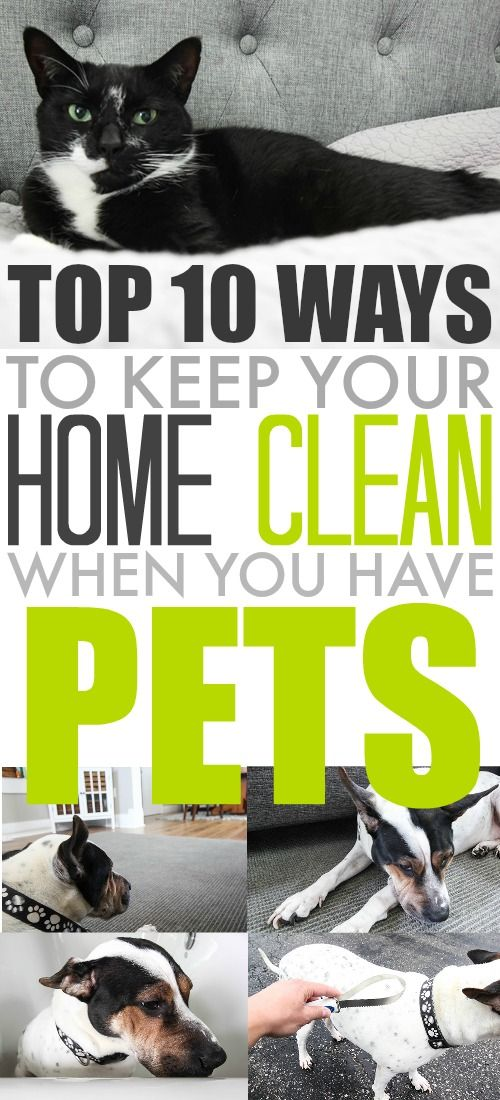 Best 25 Pet Care Ideas On Pinterest Dog Care Dog Care