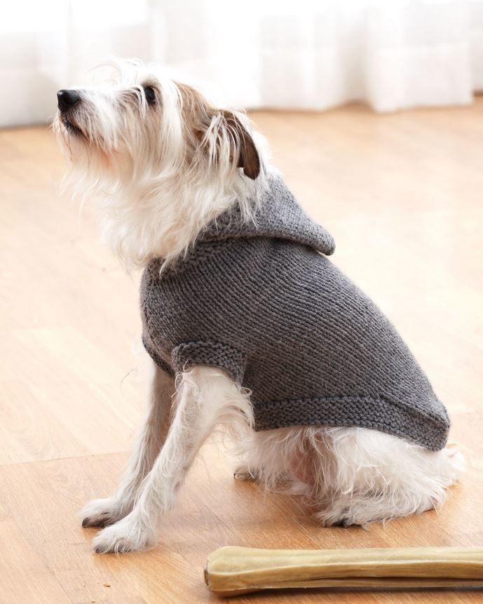 Sparkys Favorite Knit Sweater - free pattern.  With this adorable dog and the sweet hooded sweater, what's not to love?