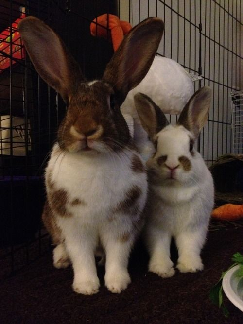 nuggetbuns:  What do you mean we're out of Craisins?! We are so upset, you don't even know.