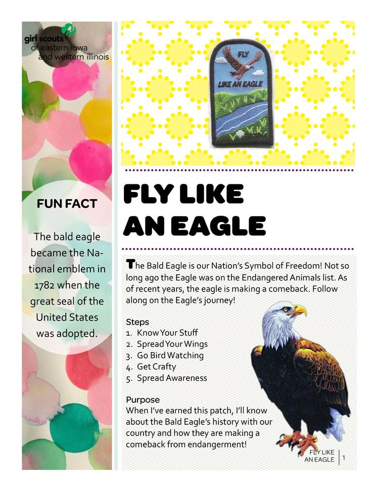Council's Own Fly Like An Eagle  Girl Scouts of Eastern Iowa and Western Illinois
