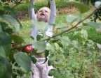 Pick-Your-Own Apple Orchards this Autumn in Connecticut (Eastern CT) - Apple Picking in Eastern CT | Mommy Poppins - Things to Do in Connecticut with kids