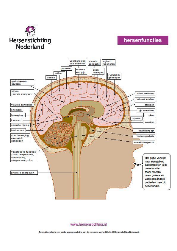 Functies van de hersenen