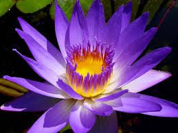 Beautiful!!!-Lily