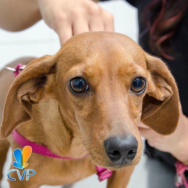 Accede a nuestros excelentes descuentos solicitando tu cita con antelación. Puedes hacerlo a través de nuestra página web http://bit.ly/1MiKjZG, por medio del correo citas@clinicaveterinariapoblado.com, o si lo prefieres telefónicamente al 4446287 (4446CVP) #ServiciosCVP  #Mascotas #CVP #PetLovers #Pets #Perros #Gatos #Dogs #Cats #Mascotagram #Petstagram #PetShop #DogLovers #CatLovers #NoAlMaltratoAnimal #LovePets #Instapet #ILoveMyPet #DogLife #Veterinaria #Pets&Coffee