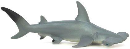 Bild vom Artikel Hammerhai
