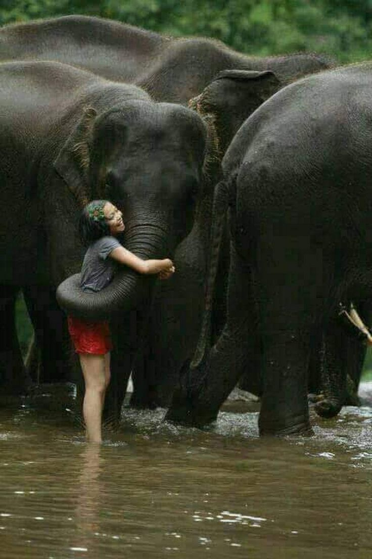 Elephant shag women, teens lesbians sex