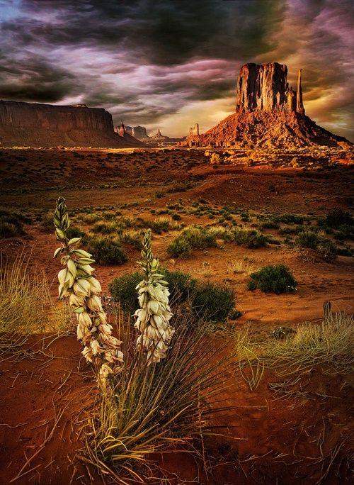 Agave Plant & Mesas, Southwest Desert, USA
