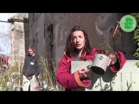 Les bons tuyaux de Manon Rivière | Hortus Focus