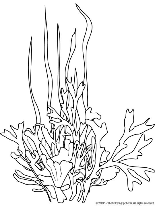 seaweed cartoon coloring pages - photo#6