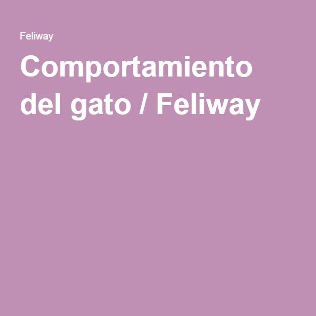 Comportamiento del gato / Feliway